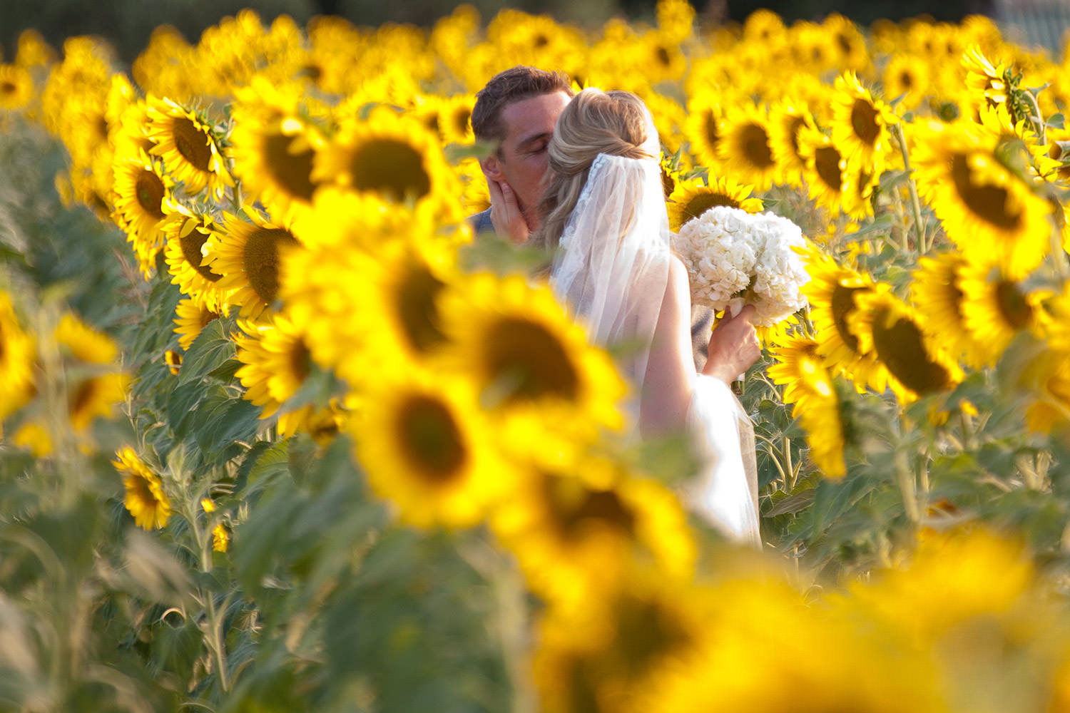 bride and groom in sunflowers